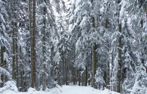 Autres activités hivernales