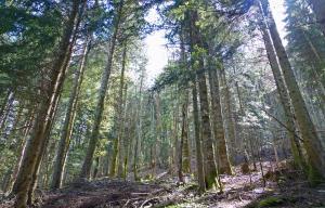 Association Syndicale Libre de Gestion Forestière