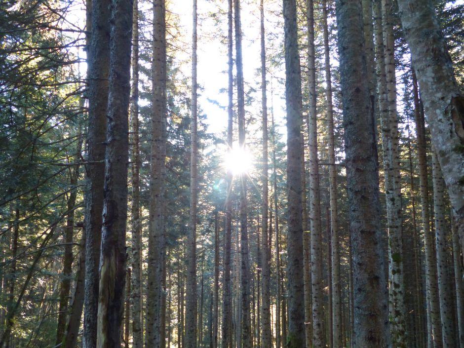 Agriculture et forêt